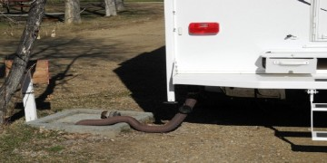 RV Dumping with hose