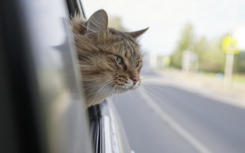 How to keep cats off your car hood