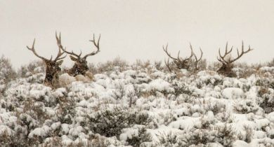 News Blip: Protecting Public Lands