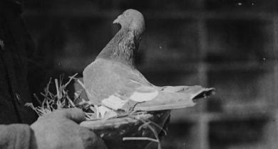 Image for Rewriting History: American Pigeon Museum [Oklahoma]